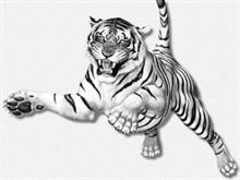 tiger_leaping_ERC.jpg