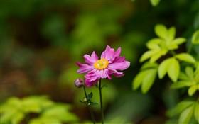 Simple pink flower