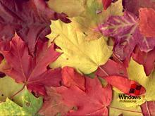 Autumn XP