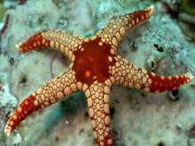 Sea star-by titusboy25