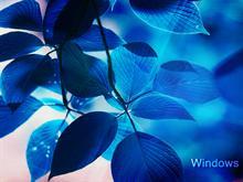 Window Vista - The Blue Version