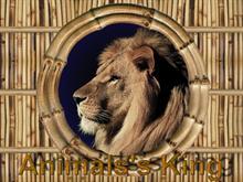 Animals King
