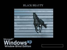 Black Beauty - Window Blinds Edition