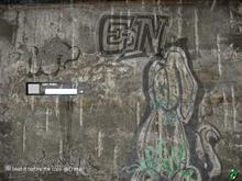 Lizard Graffiti
