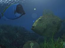 Underwater Life LSV