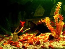 Aquarium ReDecorated