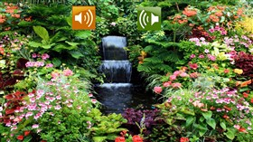 Spring Garden Sounds