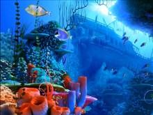 Coral Reef 3D
