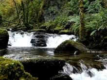 Jungle River Falls