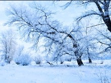 Winter Scape Snowfall