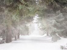 Windy Winterforest