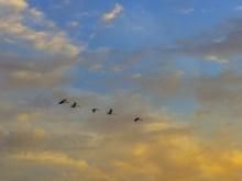 Flying Free 3