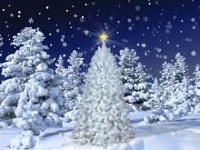 White Christmas 2013 LV