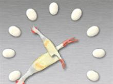 Rubber Chicken Clock